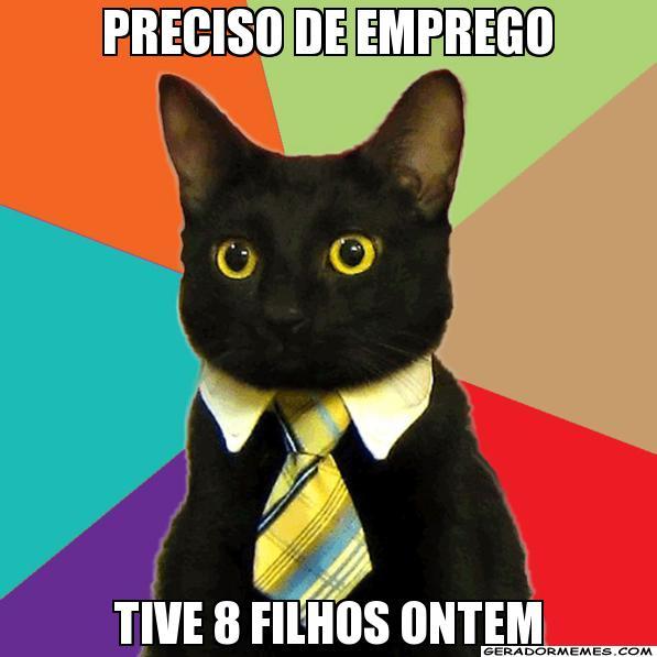 gato emprego